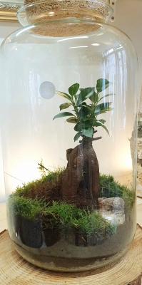 Bonsai Jar